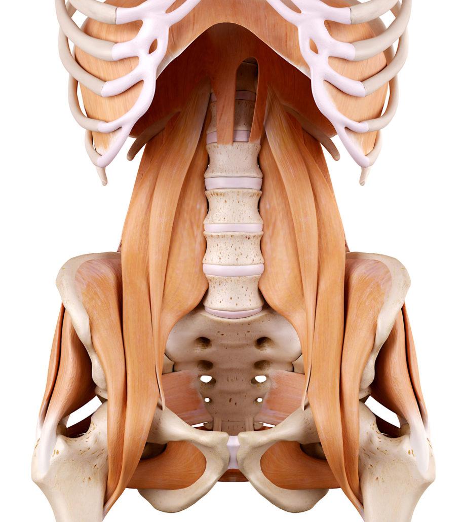 Atemberaubend Hüftschmerzen Anatomie Ideen - Menschliche Anatomie ...