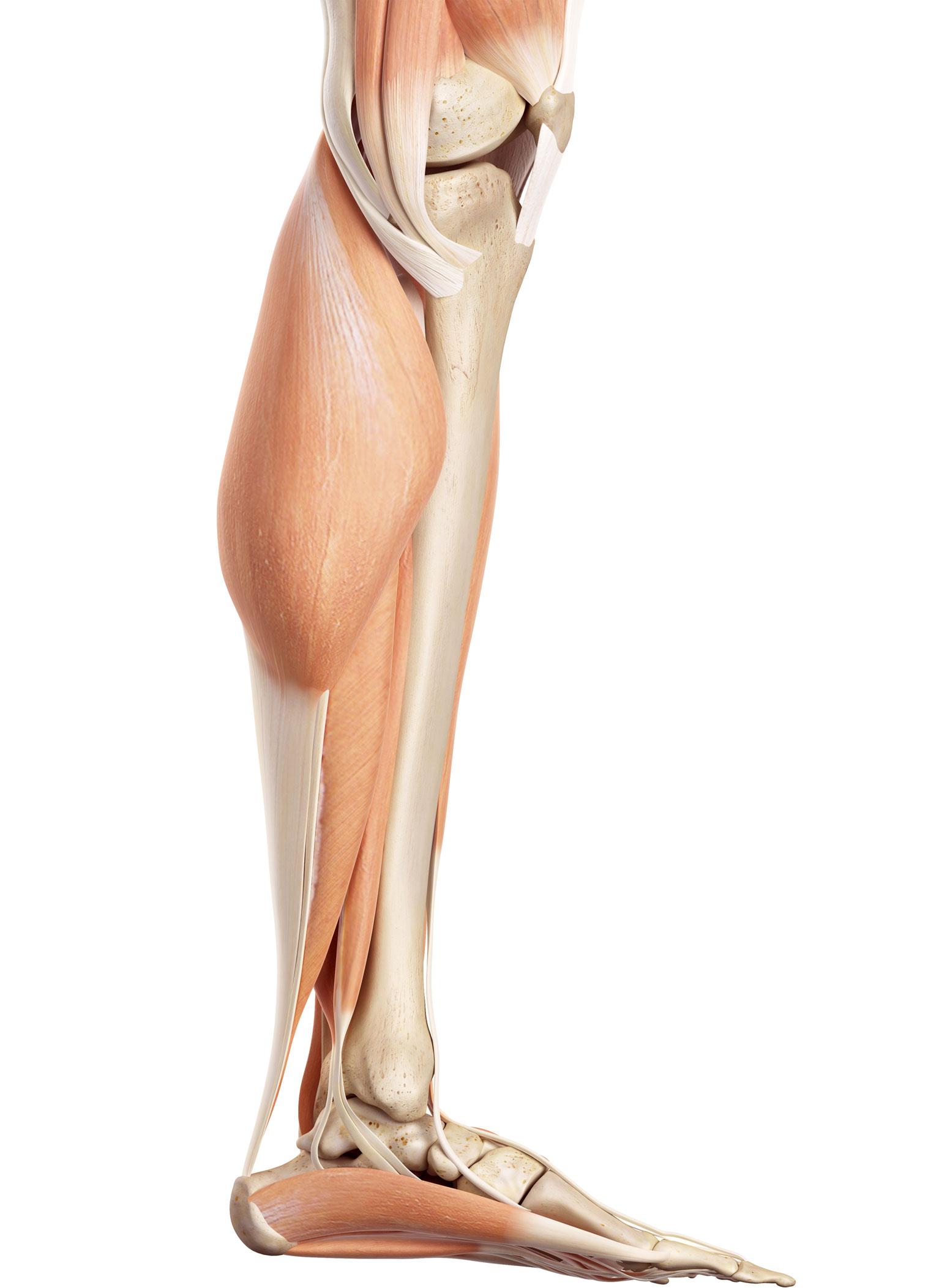 Großartig Knie Anatomie Schmerzsymptome Zeitgenössisch - Menschliche ...