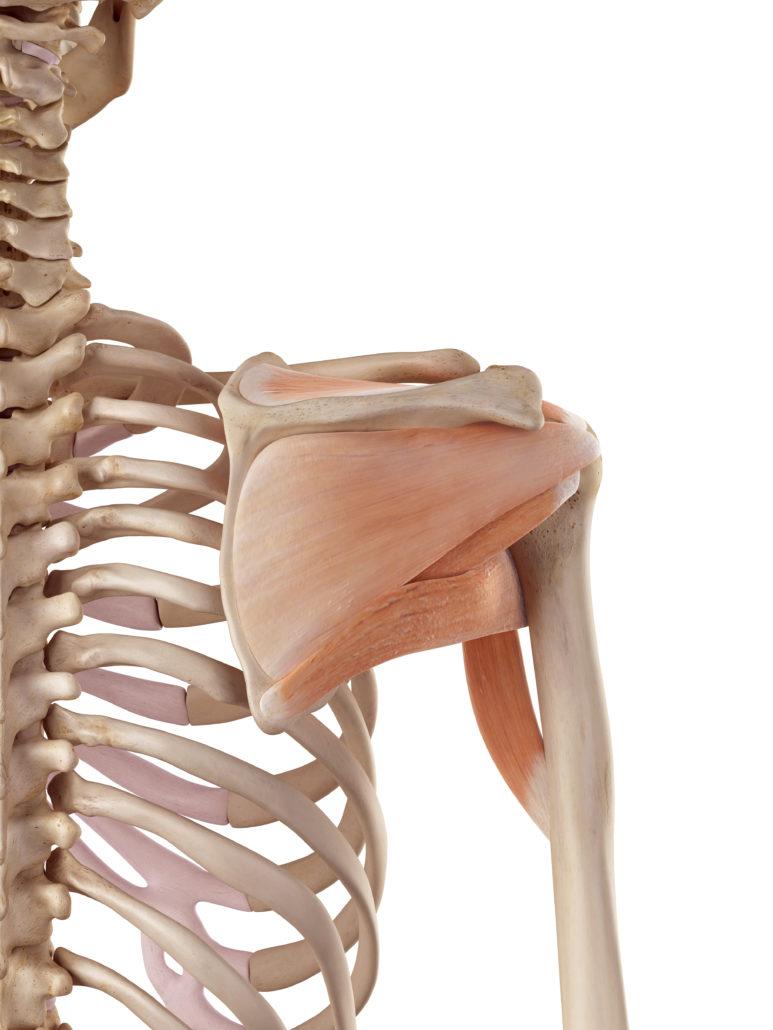 Schulterschmerzen - Schmerzen in Schulter Behandlung - EIM..