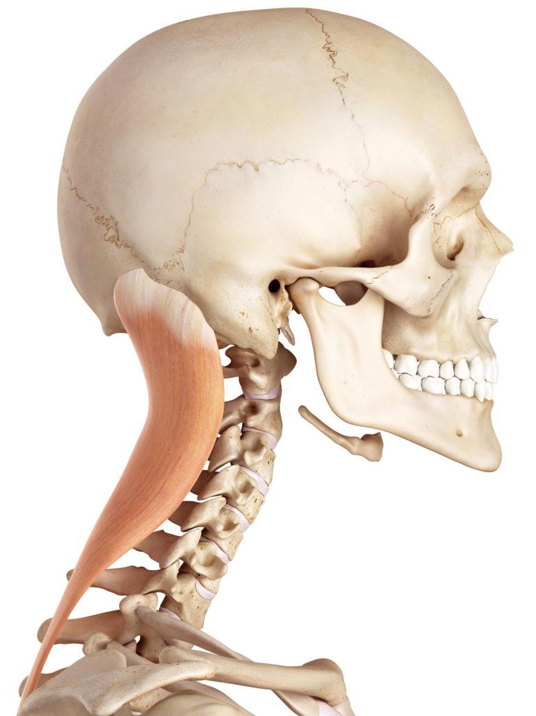Kopfschmerzen - Schmerzen im Kopf - EIM Praxis - Schmerzen behandeln