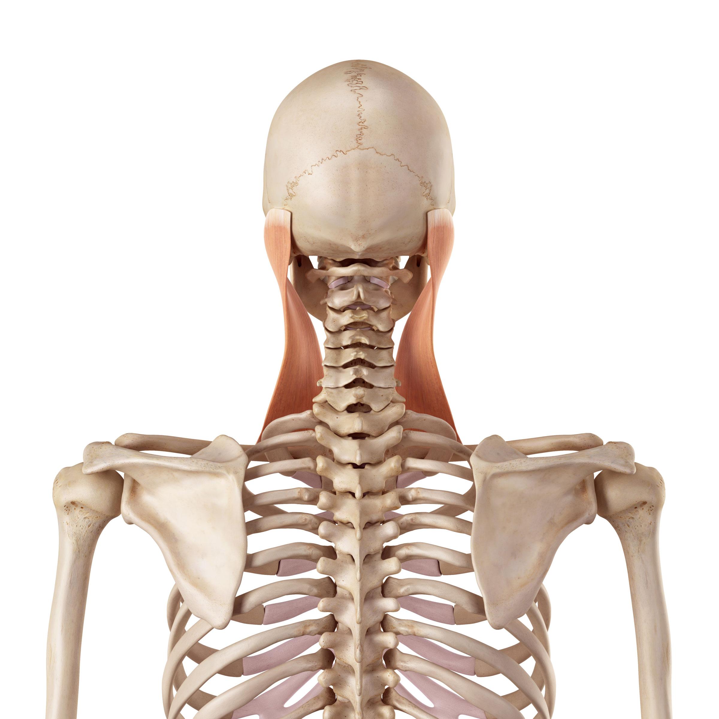 Schwindel Durch Nackenprobleme