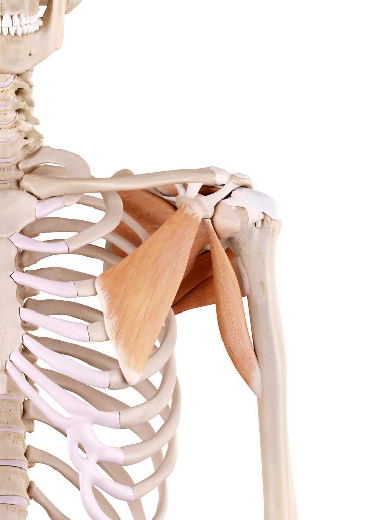 Schulterschmerzen – Schmerzen in Schulter Behandlung - EIM Praxis ...