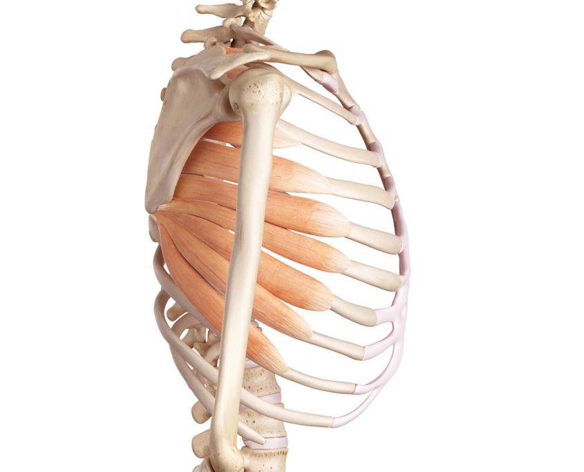 Verkürzte Brustmuskulatur Symptome